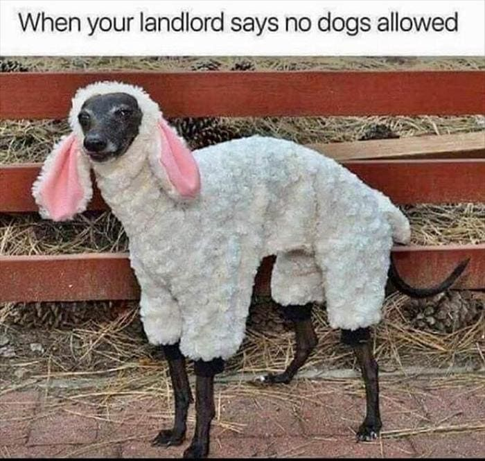New Funny Cute Funny Animal Pics Of The Day – Wackyy Picdump 7 (70 Photos) - Page 5 of 7 - Wackyy Funny Animal Pics Of The Day – Wackyy Picdump 7 (70 Photos)-50 9