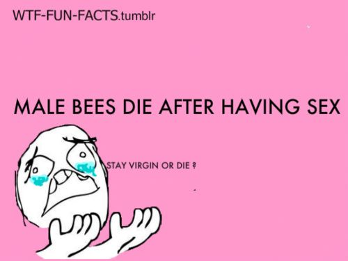 """more of """"WTF-FUN-FACTS"""" here funny & weird facts"""