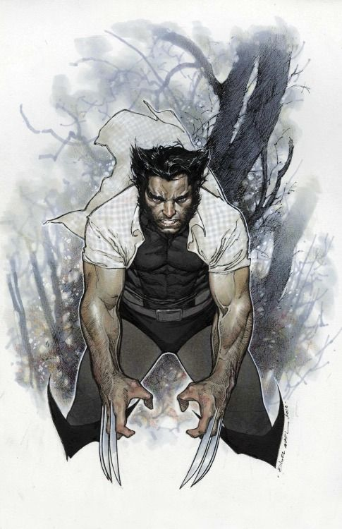 Wolverine by Olivier Coipel