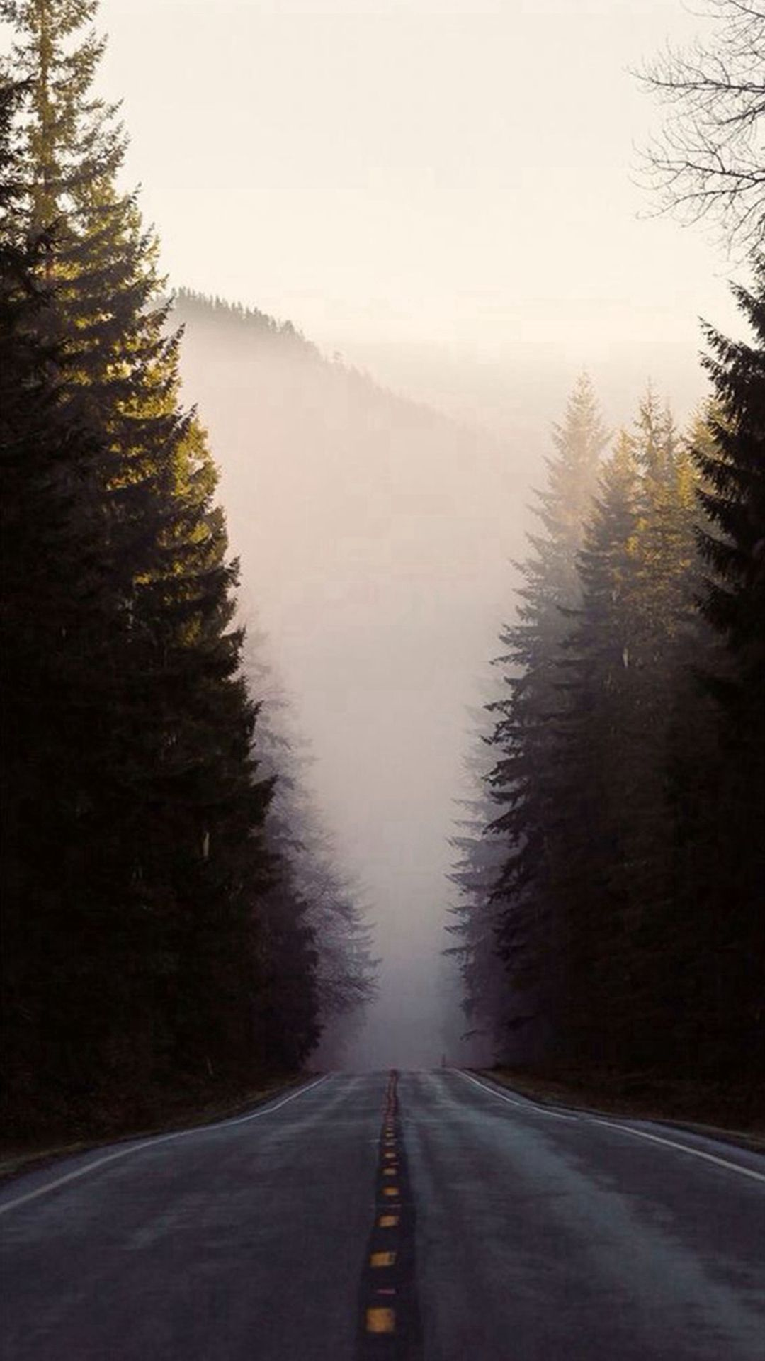 Misty Forest Road Pine Trees Iphone 8 Wallpaper Iphone Wallpaper Winter Landscape Background Tree Wallpaper Iphone