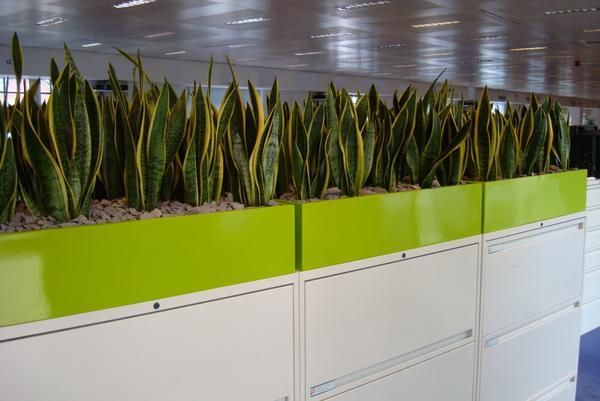 office planter boxes. planters in office google search planter boxes i