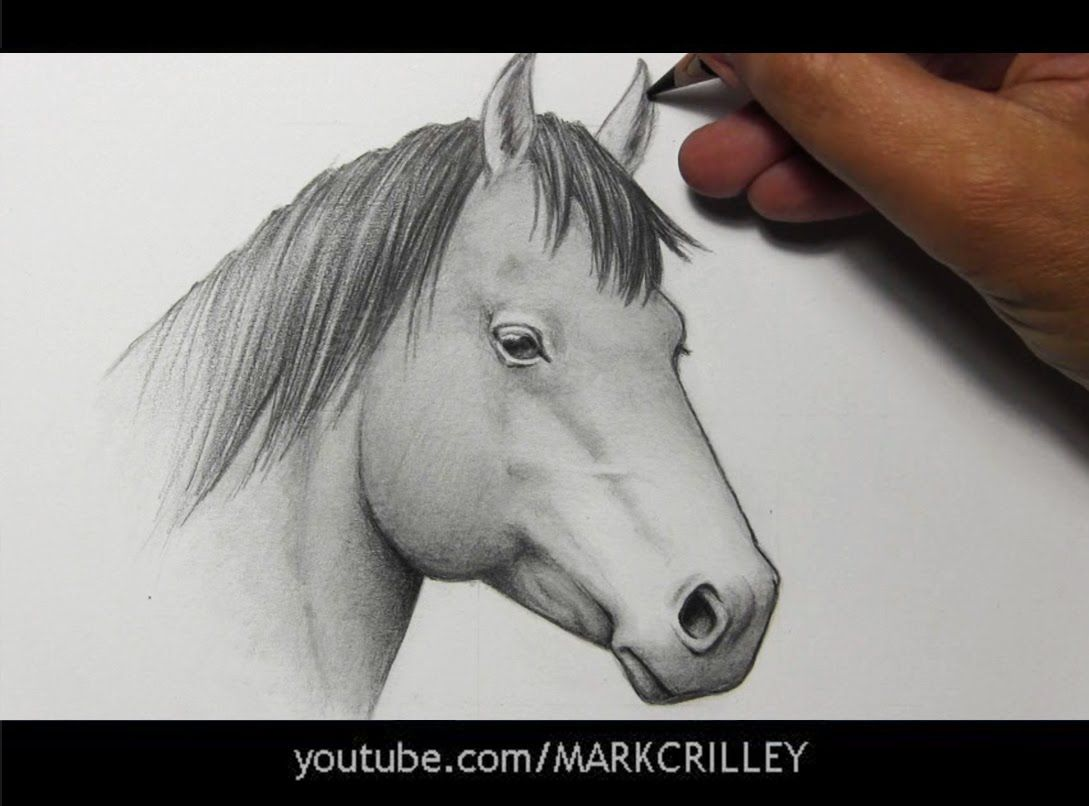 Drawing Time Lapse Horse