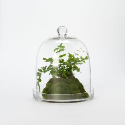 Glass Bell Cloche