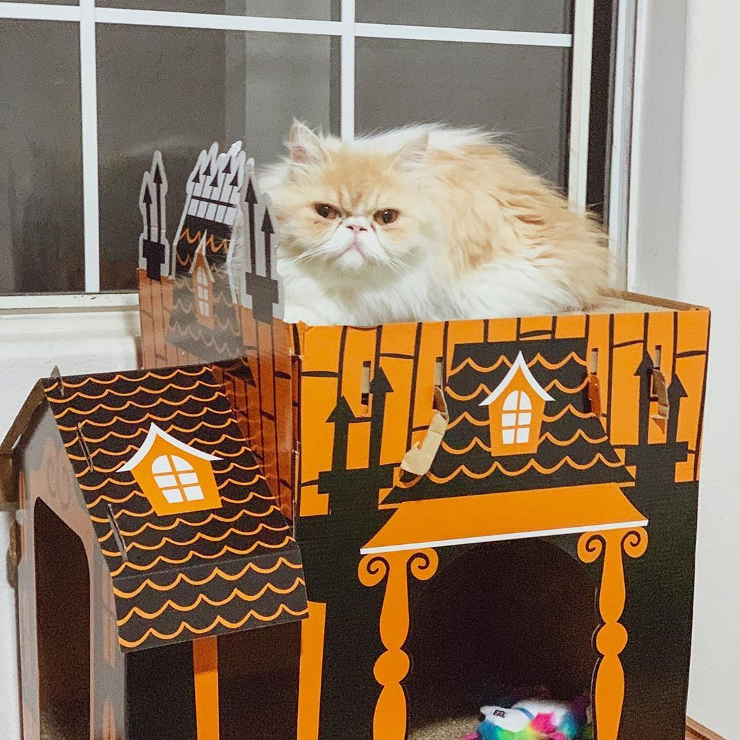 Lola ready for Halloween in her new treasured haunted manor.