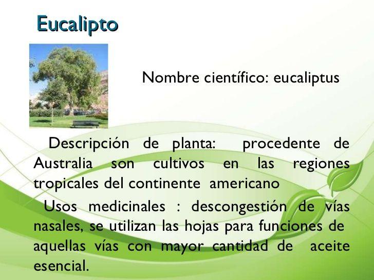 Presentacin de plantas medicinales cartilla 11 for Que son las plantas ornamentales y para que sirven
