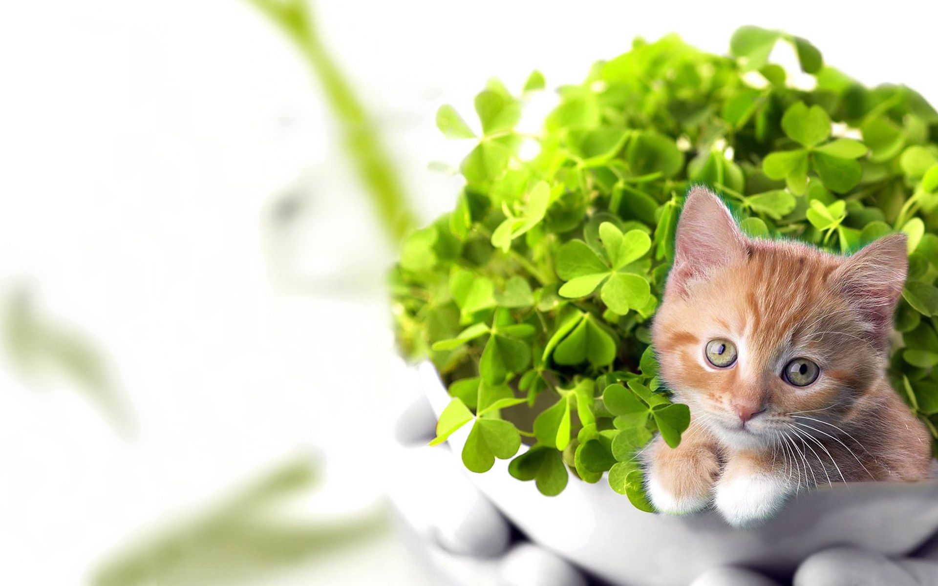 HD Lucky Kitten Wallpaper Download Free