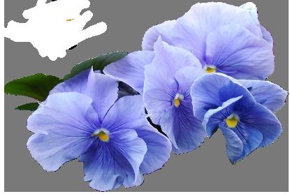 Blue Violet Flower Png Clipart Blue Flower Png Violet Flower Violet Aesthetic