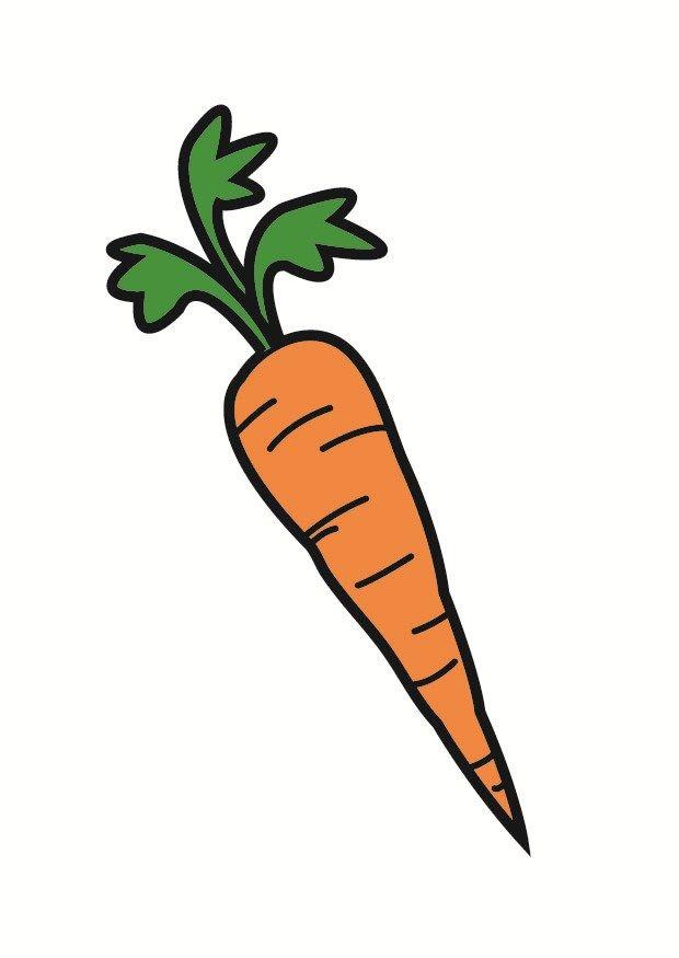 Naturaleza Verduras Zanahoria 442777 Png 620 875 Science For