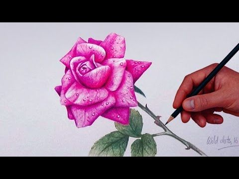 How To Draw And Shade Dahlia Flower Realistic Youtube Flower Drawing Roses Drawing Colored Pencils