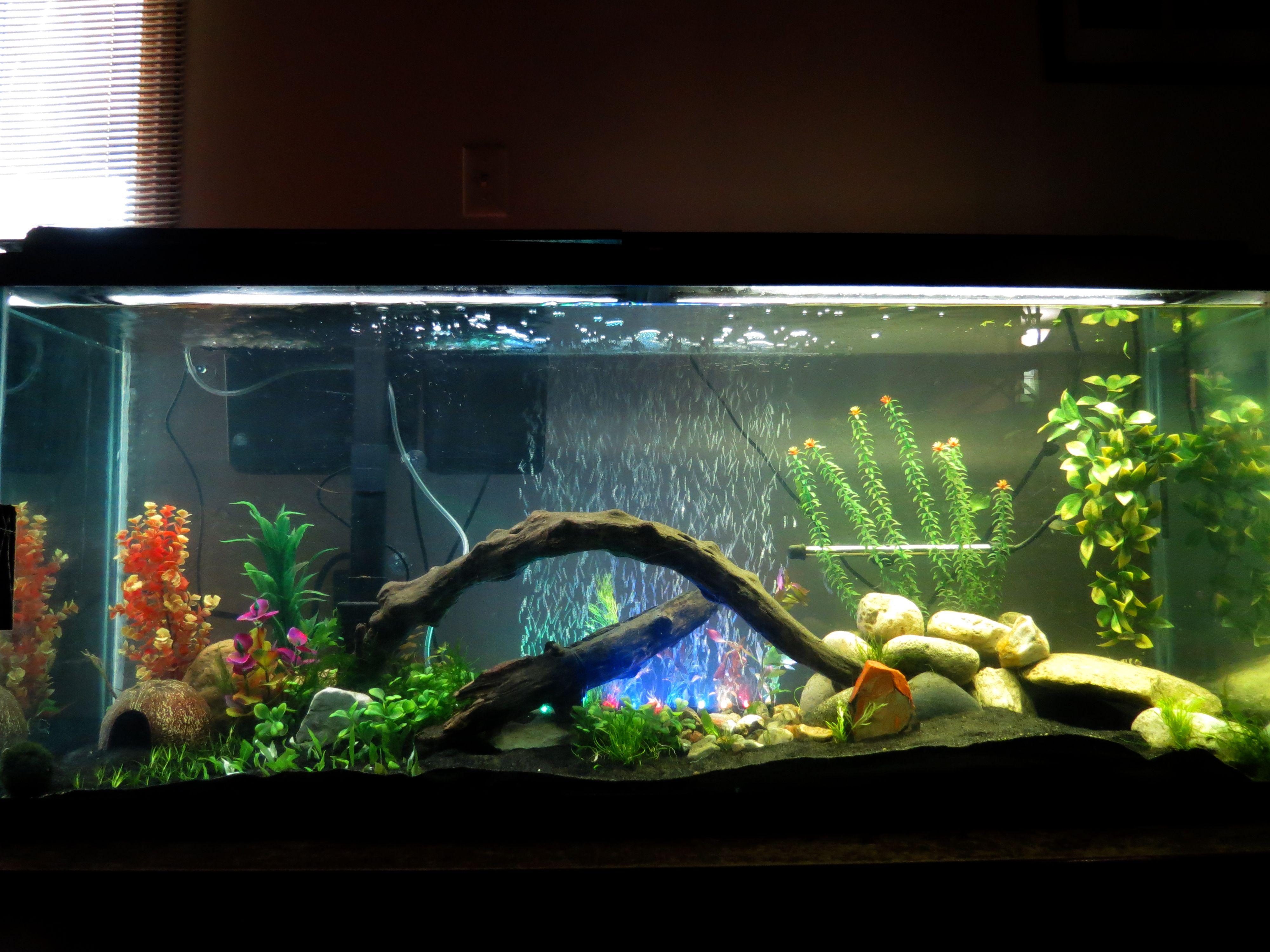 55 gallon aquarium fish tank trustefish Fish Pinterest