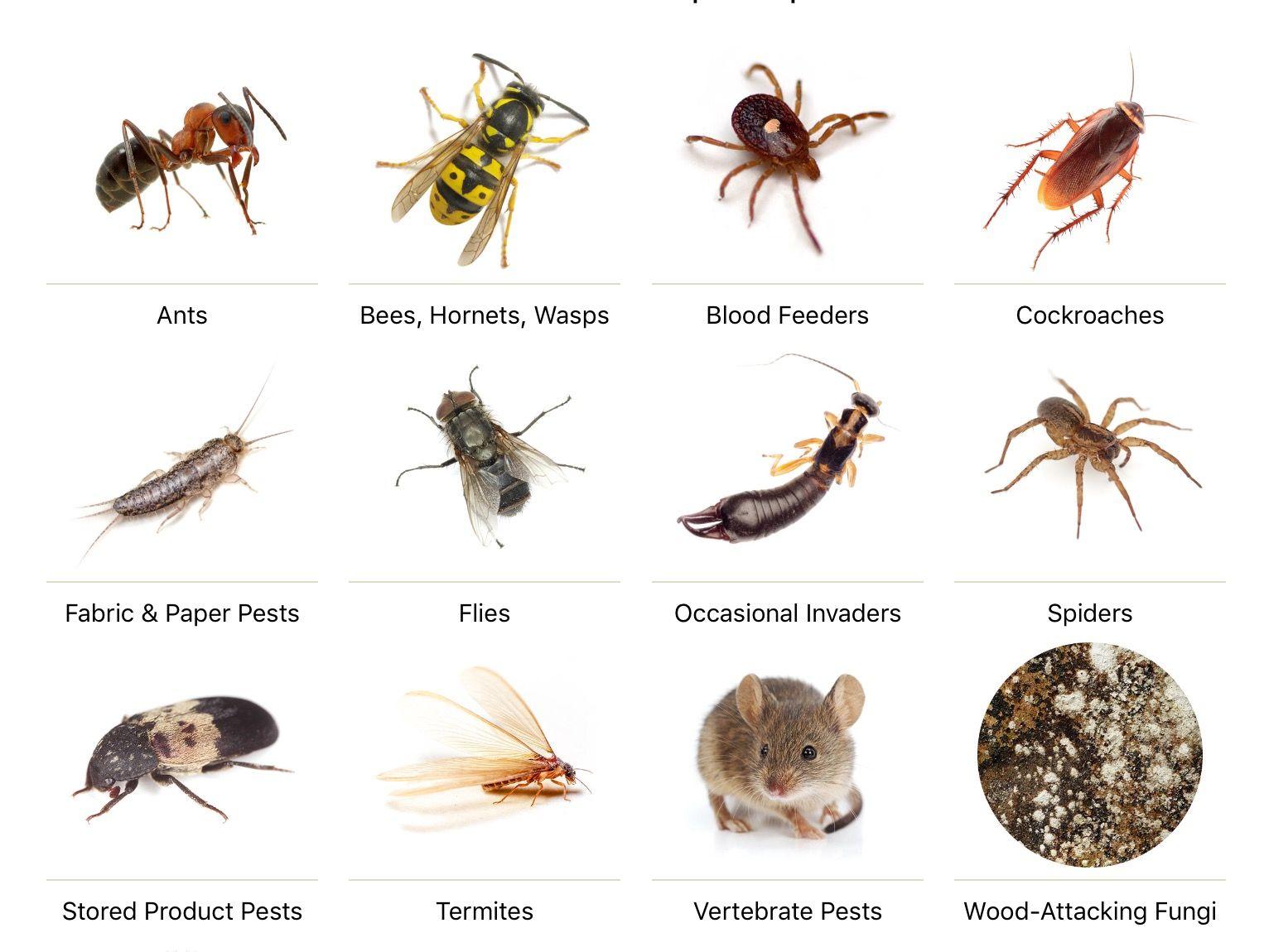 General Pests Control Too close for comfort, Pests, Pest