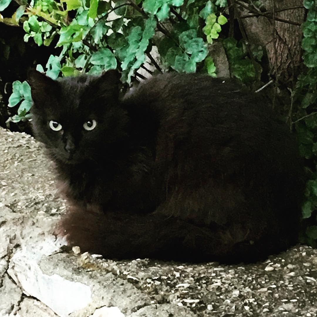 #cat #cats #TagsForLikes #catsagram #catstagram #instagood #kitten #kitty #kittens #pet #pets #animal #animals #petstagram #petsagram #photooftheday #catsofinstagram #ilovemycat #instagramcats #nature #catoftheday #lovecats #furry #sleeping #lovekittens #adorable #catlover #instacat by gtamir01