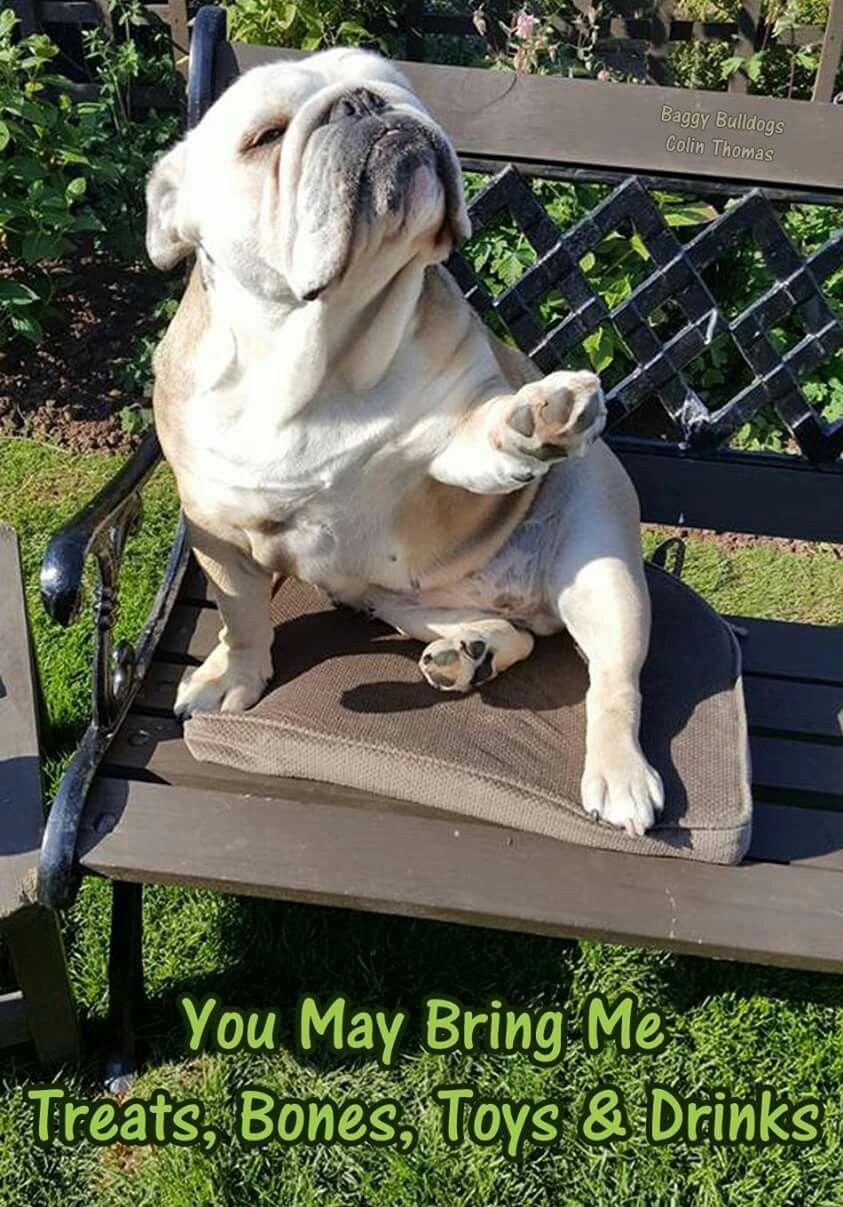 And Make It Snappy Bulldog English Bulldog Puppies Cute Dogs