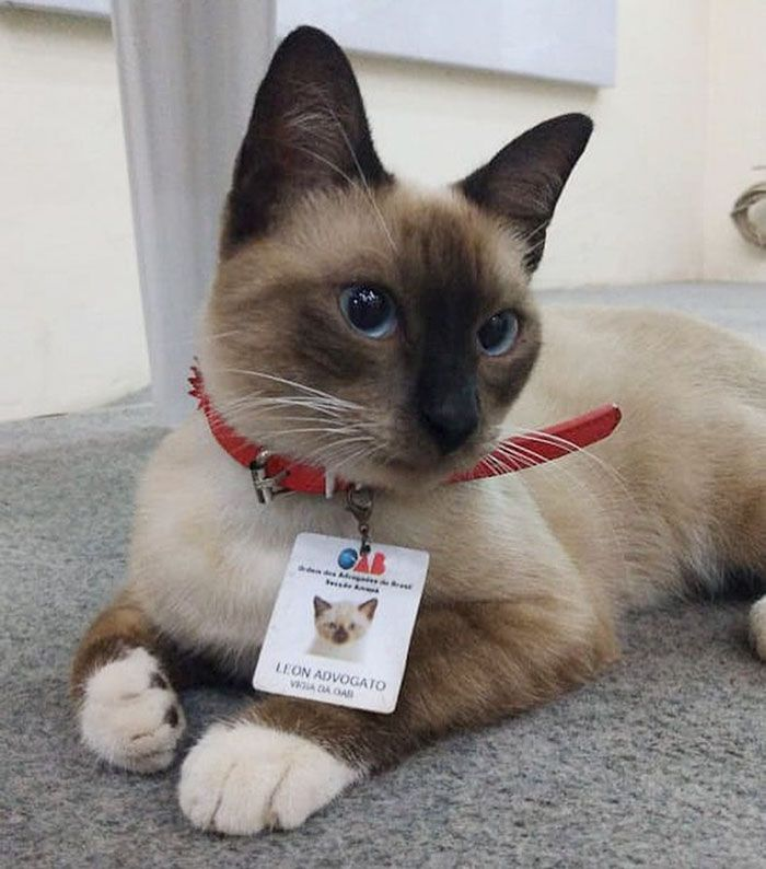 Some People Started Filing Complaints About A Stray Kitty