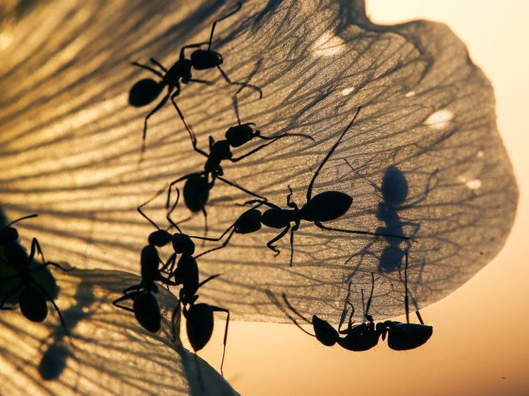 Ants never get stuck in traffic jams heres why wired