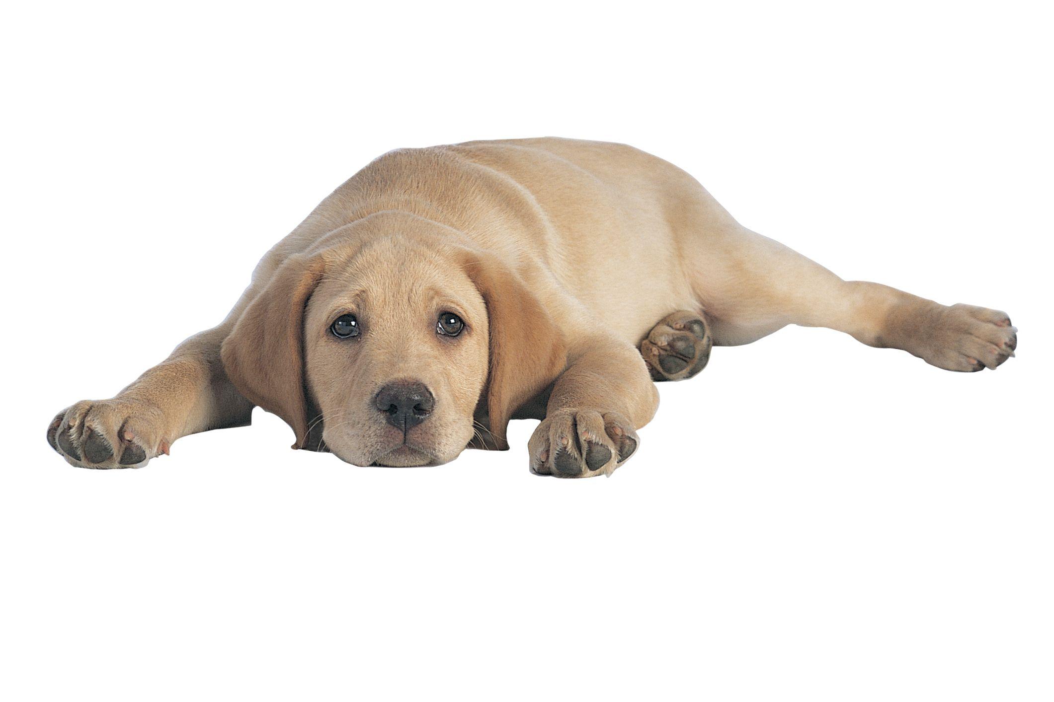 Holistic Remedy for Intestinal Blockage in a Dog | Cuteness.com