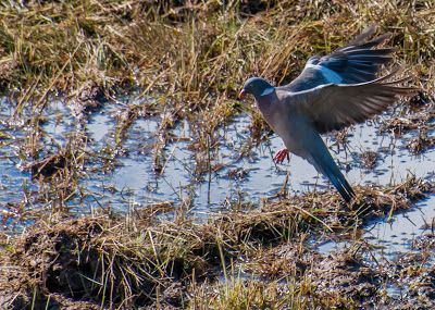 Il Dolce Far Niente: Birdwatching and other stuff
