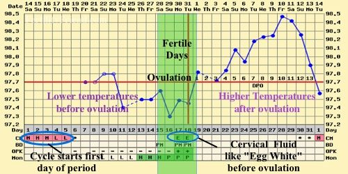 Sample Menstrual Calendar Blank Bbt Chart Instructions To Detect
