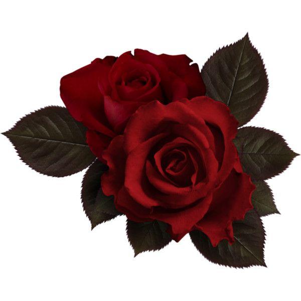 Wpd Nevere Love El 53 Png Flowers Red Roses Rose