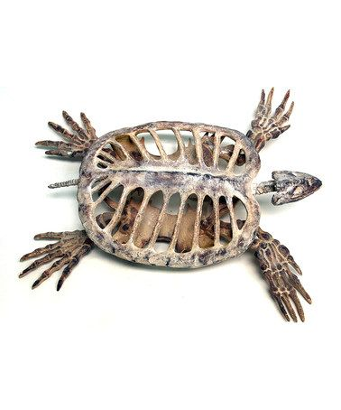 Look what I found on #zulily! Polyresin Turtle Skeleton Décor ...