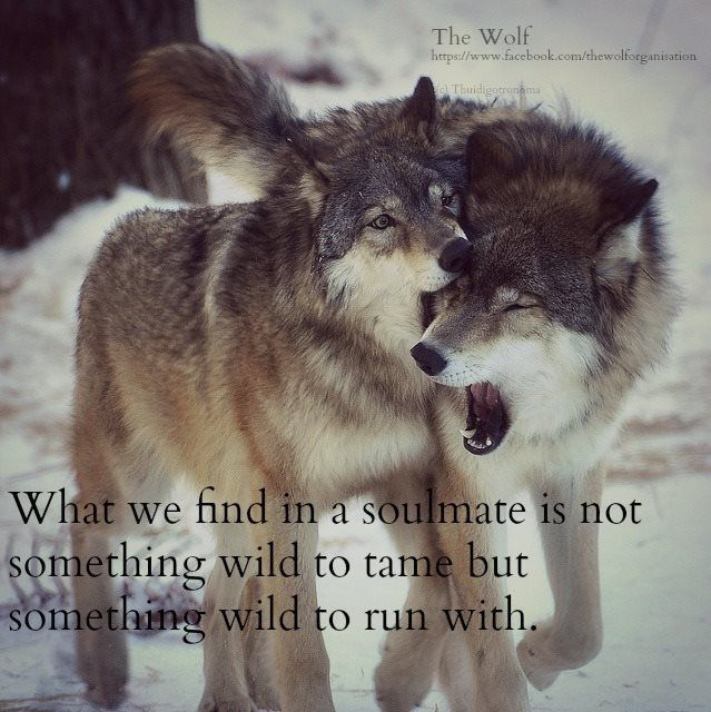 Tattoo Quotes Wolf: Relationship Quotes, Wolf