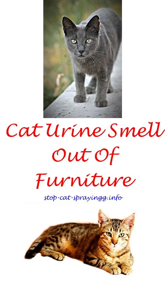 Attirant Cat Urine Marking Deterrent Cat Urine Ammonia   Best Way To Get Cat Pee  Smell Out Of Couch.my Neutered Cat Sprays Best Carpet Shampoo For Cat Urineu2026