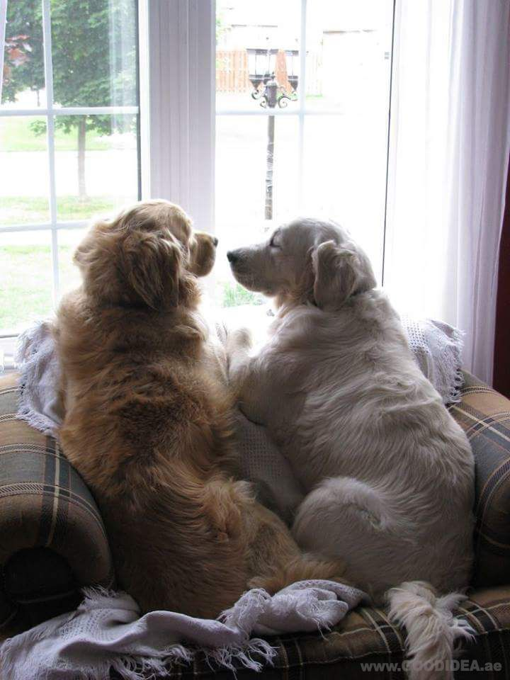 Adorable Friendship Dog Dogs Dogquotes Pets Petquotes