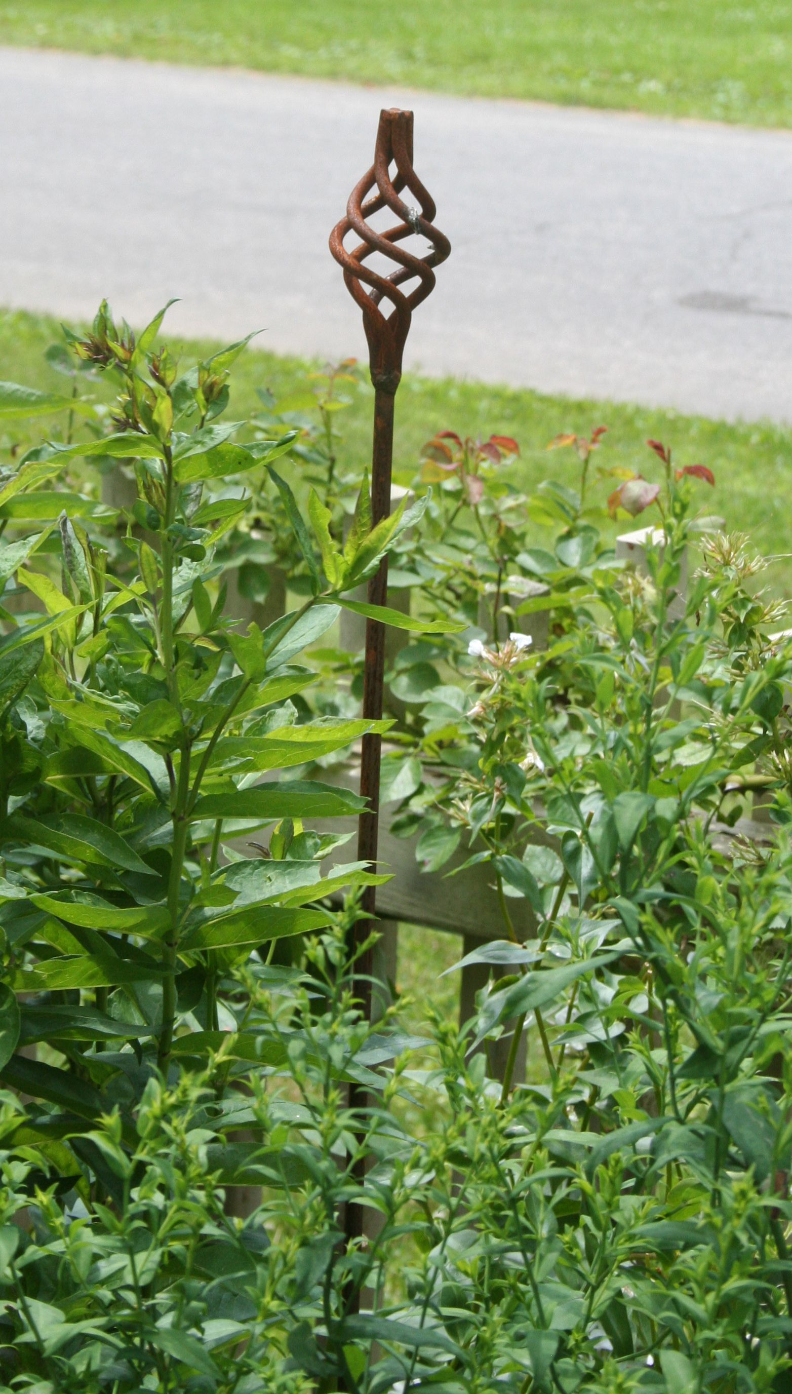 iron spiral stakes the only thing in the garden that challenges