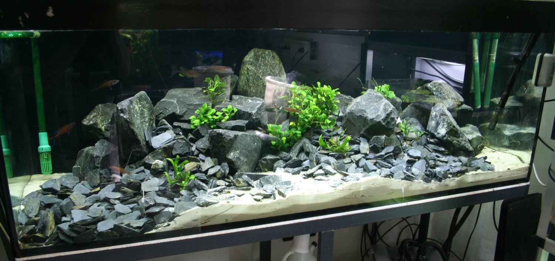 Fish Tank With Basalt Stones