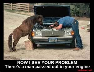 Automotive Humor Bing Images Funny Horses Horses Funny Photos