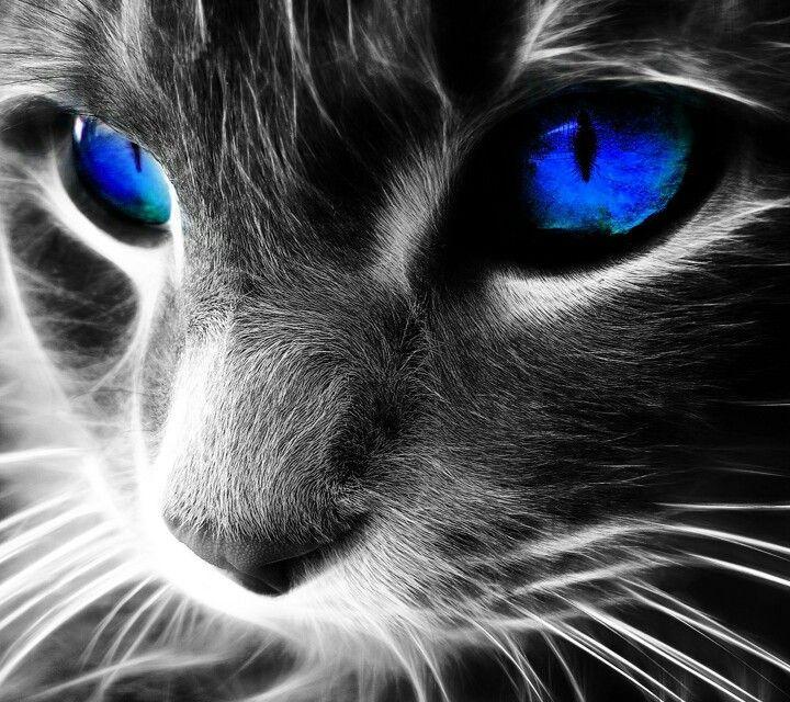 Картинки по запросу скачать картинки кошек на телефон