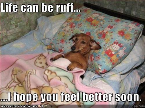 Life Can Be Ruff I Hope You Feel Better Soon Feel Better Quotes Feel Better Funny Feel Better Meme