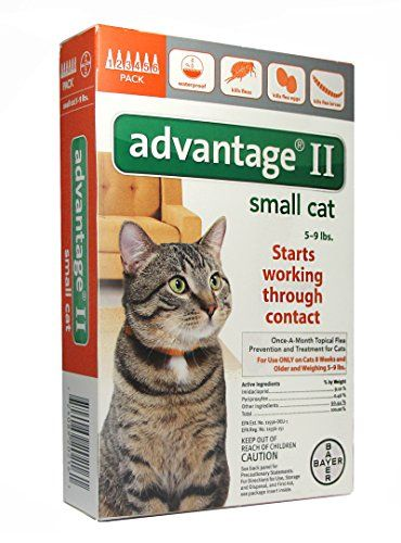 Bayer 004bay 04461677 Advantage Ii For Small Cats 5 9 Lbs Orange 6 Months Cat Fleas Flea Control For Cats Small Cat