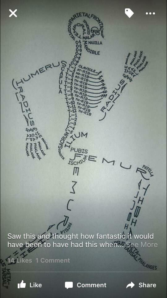Good Way To Learn The Bones In The Body Education Pinterest