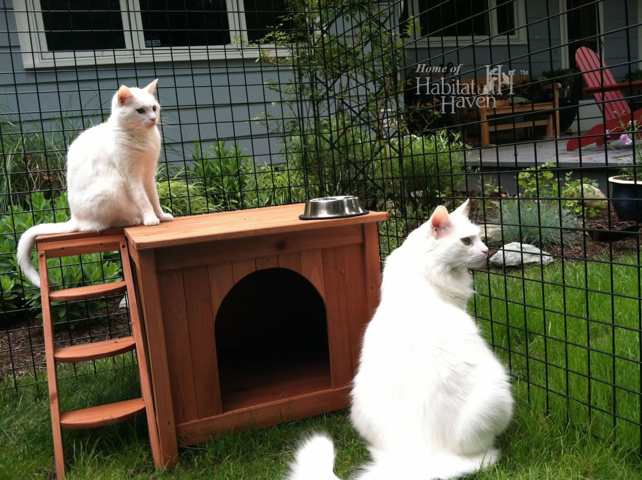 Safe, Friendly Cat and Dog Enclosures » Home of Habitat Haven