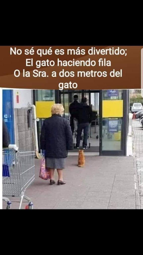 Memes Graciosos En Espanol Mejores Memes Graciosos En Espanol Catmemes Memesgatos Memes Memes Memes Divertidos Chistes Graciosos