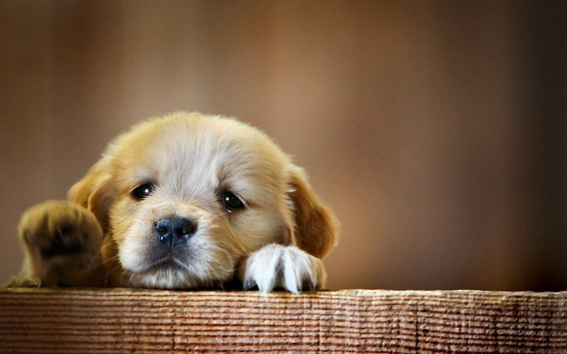 Baby Dog Wallpaper For Windows Idi Cute Baby Dogs Dog Wallpaper Cute Puppy Wallpaper