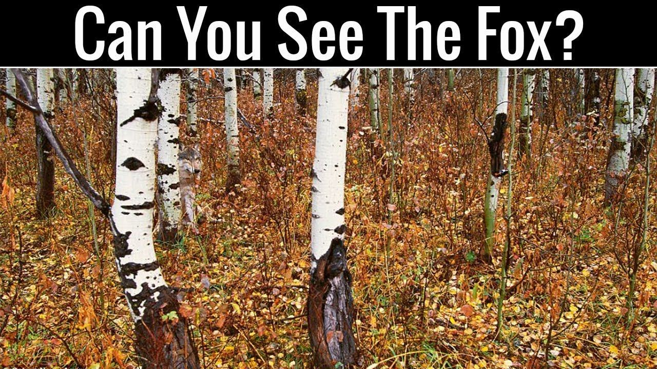 Nobody Can Find All The Hidden Animals Optical Illusions Brain
