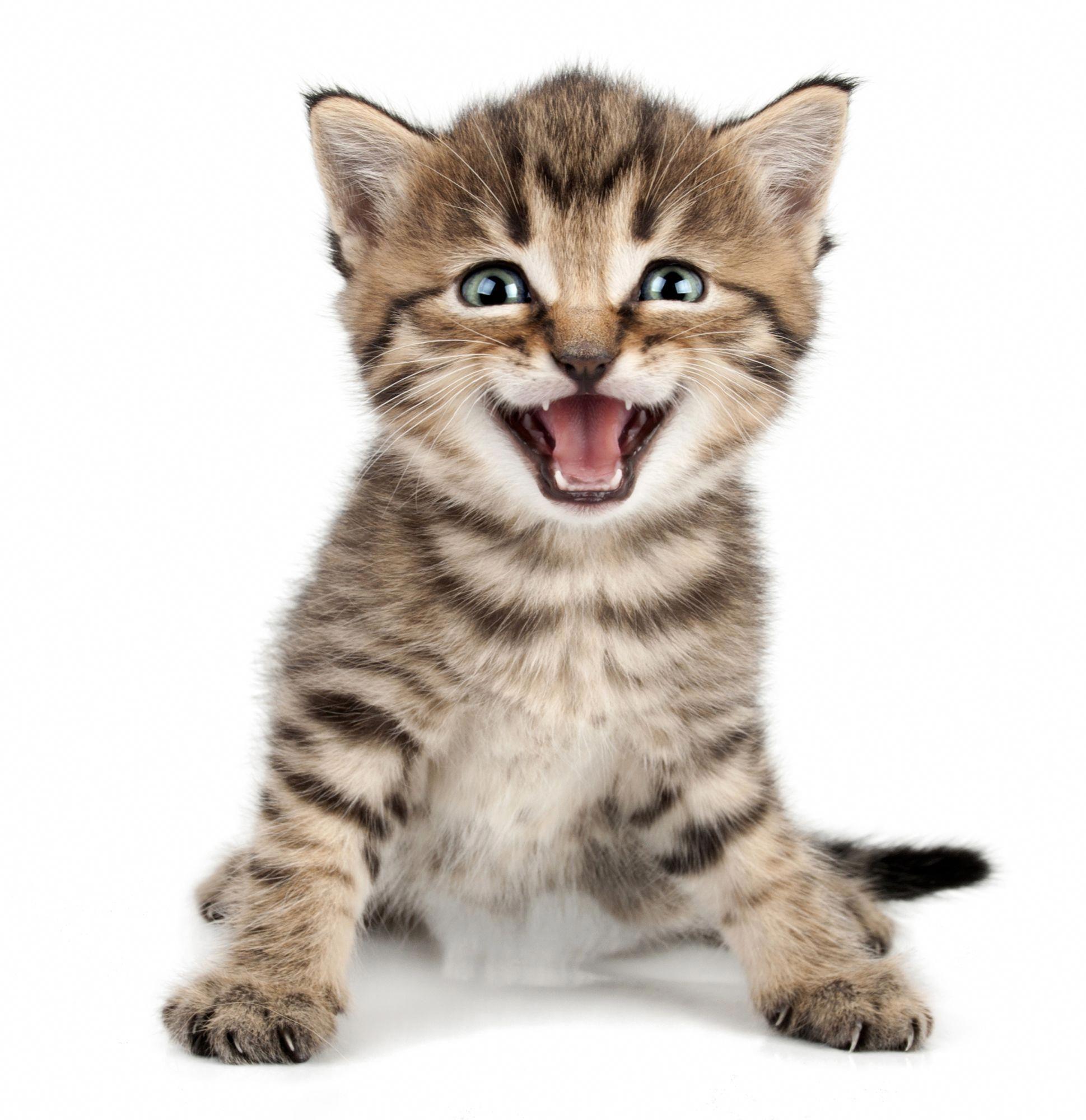 Cats The Musical Kittens Cutest Kitten Meowing Cute Little Kittens