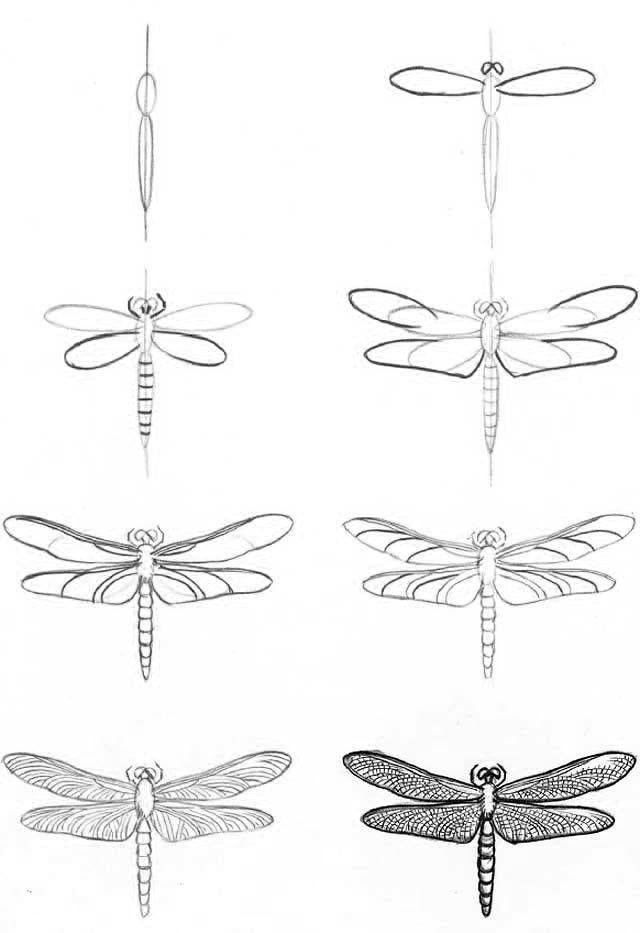 Manera de dibujar una libelula. | cosas bonitas | Pinterest ...