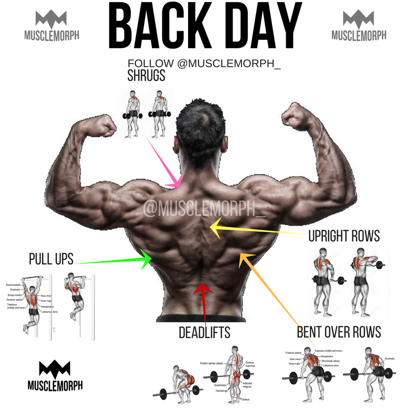 Home gym bodybuilding exercises pictures.