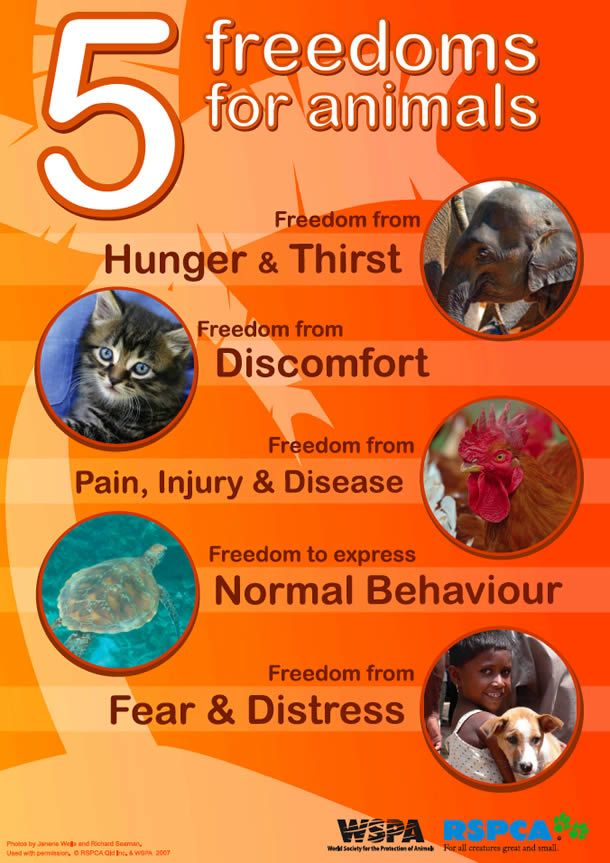 5 Freedoms for Animals Classroom Poster: http://www.thinkkind.org ...