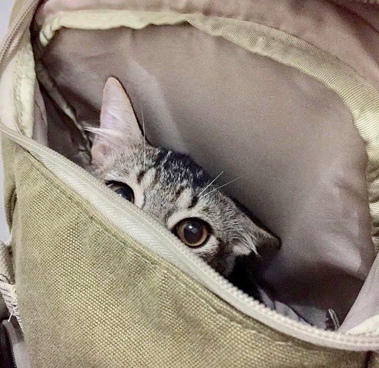 Jauh Sebelum Drama 11 85 Kg Kucingminggulegi Rumahlegi Adisatwa Cat Kucing Catstagram Catofday Catli Cats Animals