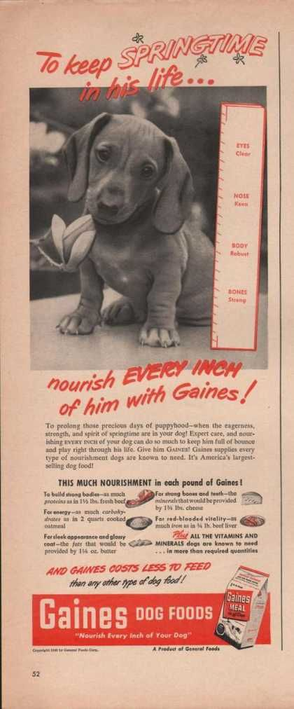 Gaines Dog Food Springtime In His Life (1949)