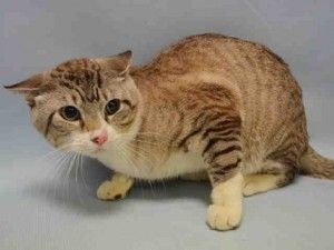 SCARED SIMBA NEEDS RESCUE OR PLEDGES Help us Save NYC AC&C