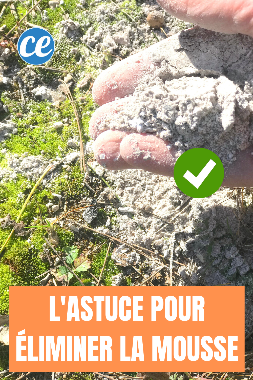 Mousse Sur La Pelouse L Astuce Pour S En Debarrasser Sans Effort En 2020 Astuce Jardin Pelouse Jardinage