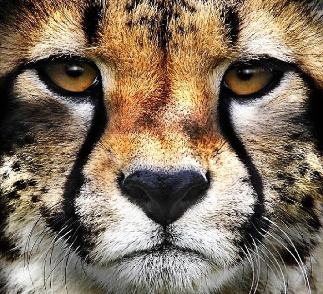 [BigButtsLikeItBig.com/Brazzers.com] Diamond Kitty (Face ...