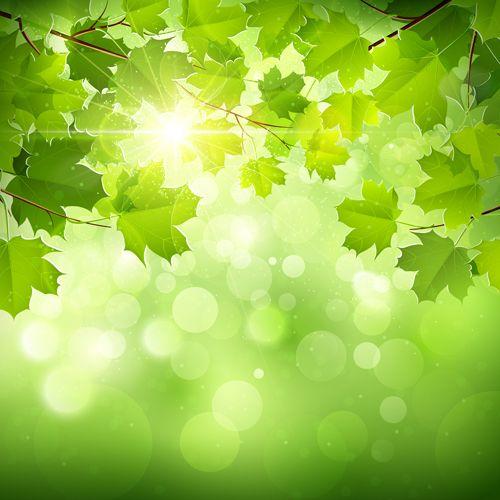 SunlightAndGreenLeafNatureBackgroundJpg   Leaf