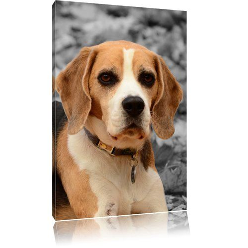 Beagle Puppy Playing In Leaves Black And White Photographic Print