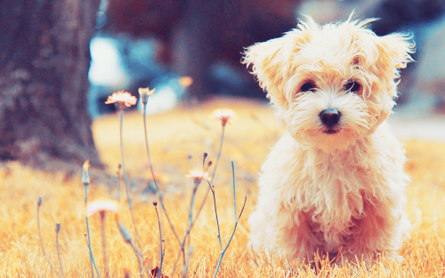 so cute (Tumblr_mfn2fdbap01rwz7fwo1_500_large)